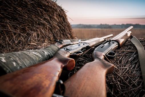 Hunting shotguns on haystack while halt during sunrise, soft focus on shutgun butt. Main focus is on breech block