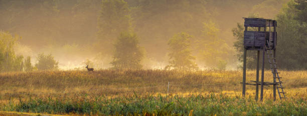 hunting tower in the valley in the morning mists - hunting stock photos and pictures