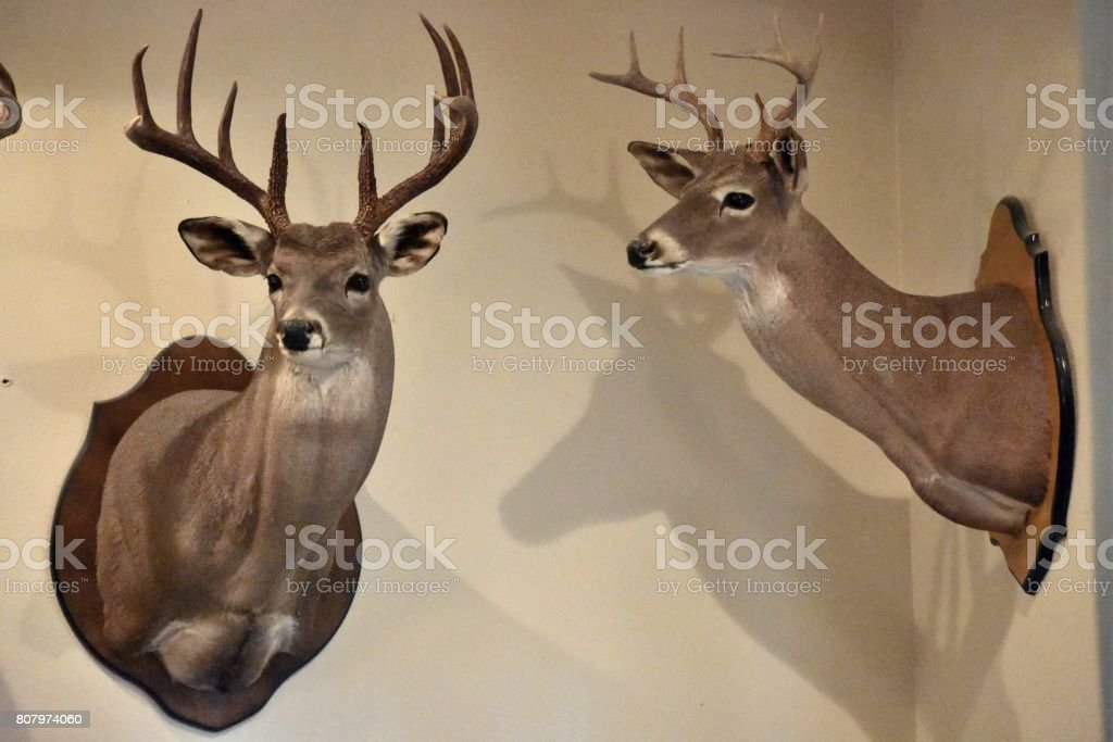 Hunting trophy's stock photo