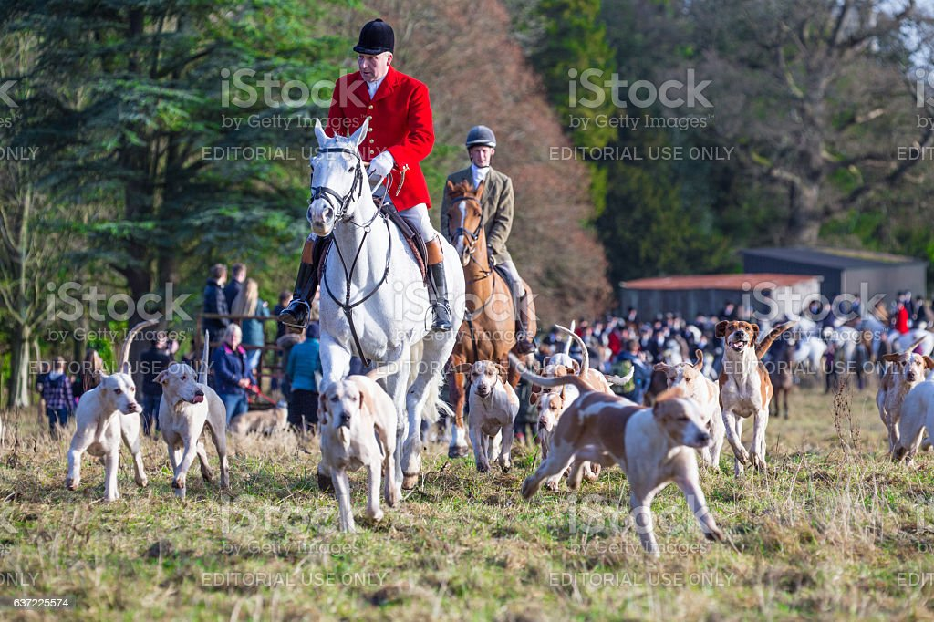 Huntmaster riding with pack of hunting hounds stock photo