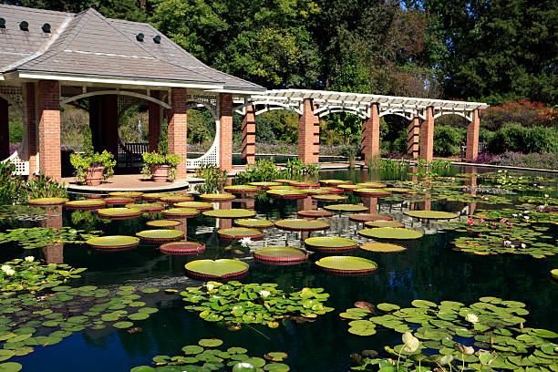 Huntsville Botanical Gardens Water Garden Water Garden at the Huntsville Alabama Botanical Gardens alabama stock pictures, royalty-free photos & images