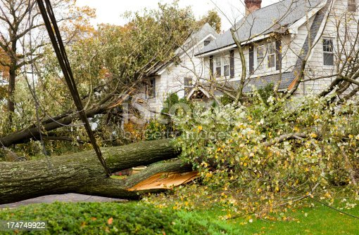 Hurricane Damaged Homes by Fallen Trees and Power Lines. Insurance Claim Concepts.