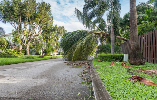 Hurricane destruction Fallen trees and dirt after hurricane passed by the city. fallen tree stock pictures, royalty-free photos & images