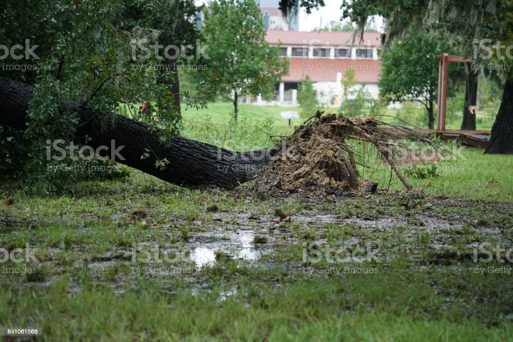 Hurricane Harvey Impacts stock photo