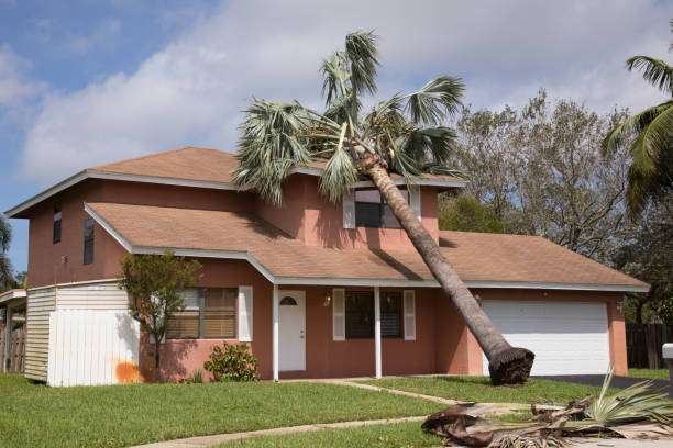Hurricane Irma SUNRISE, FL - SEPTEMBER 11: Fallen palm tree on house roof caused by hurricane Irma. Hurricane Irma hits the southern part of the state as a Category 4 hurricane making landfall in the United States in the Florida Keys at 9:10 a.m. after raking across the north coast of Cuba. fallen tree stock pictures, royalty-free photos & images