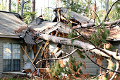 A tree is blown over to hit a house during hurricane Katrina.
