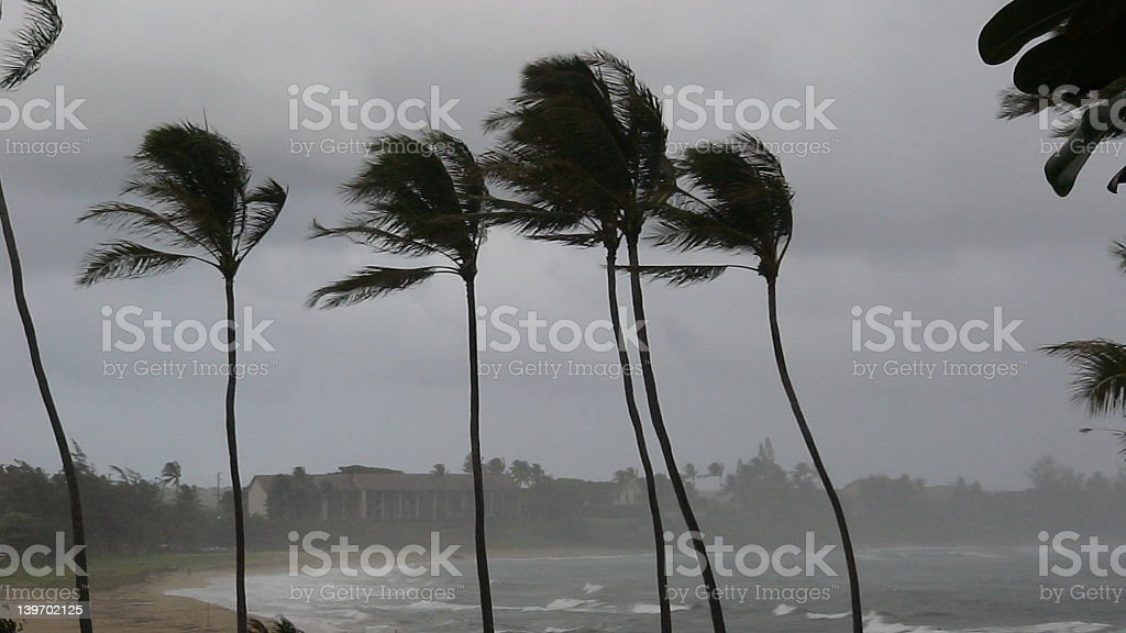 Hurricane Palms stock photo