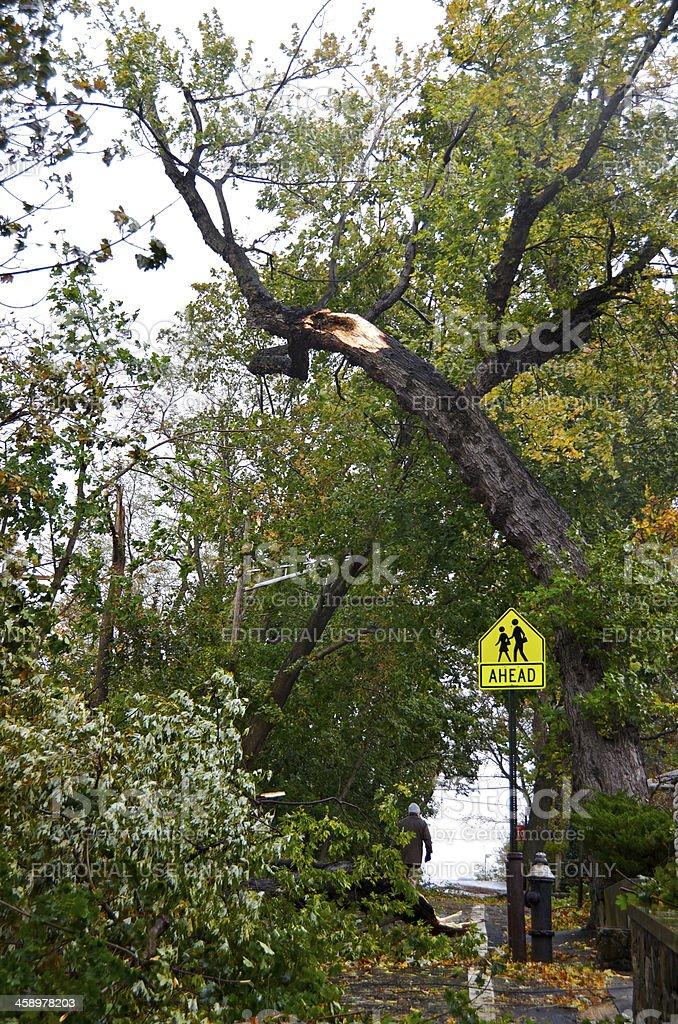 Hurricane Sandy aftermath, Man walks by Fallen trees, Bronx, NYC stock photo
