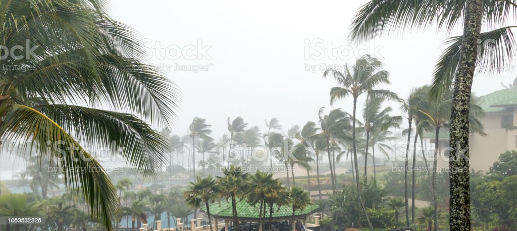 Hurricane winds and driving rain with palm trees swaying in the...