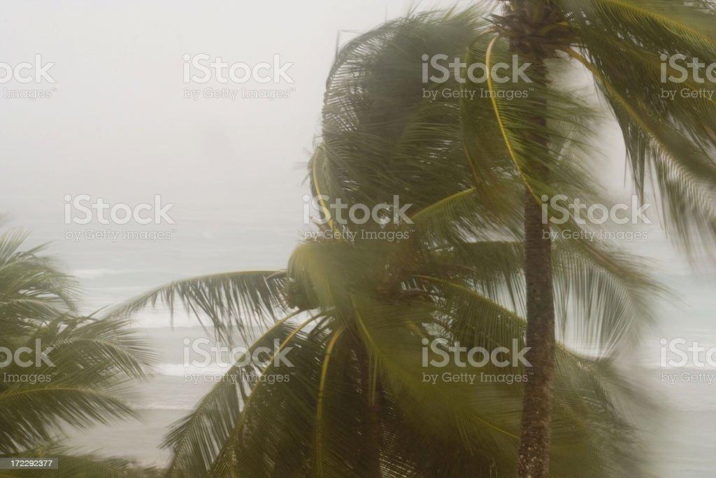 Hurricane Winds stock photo