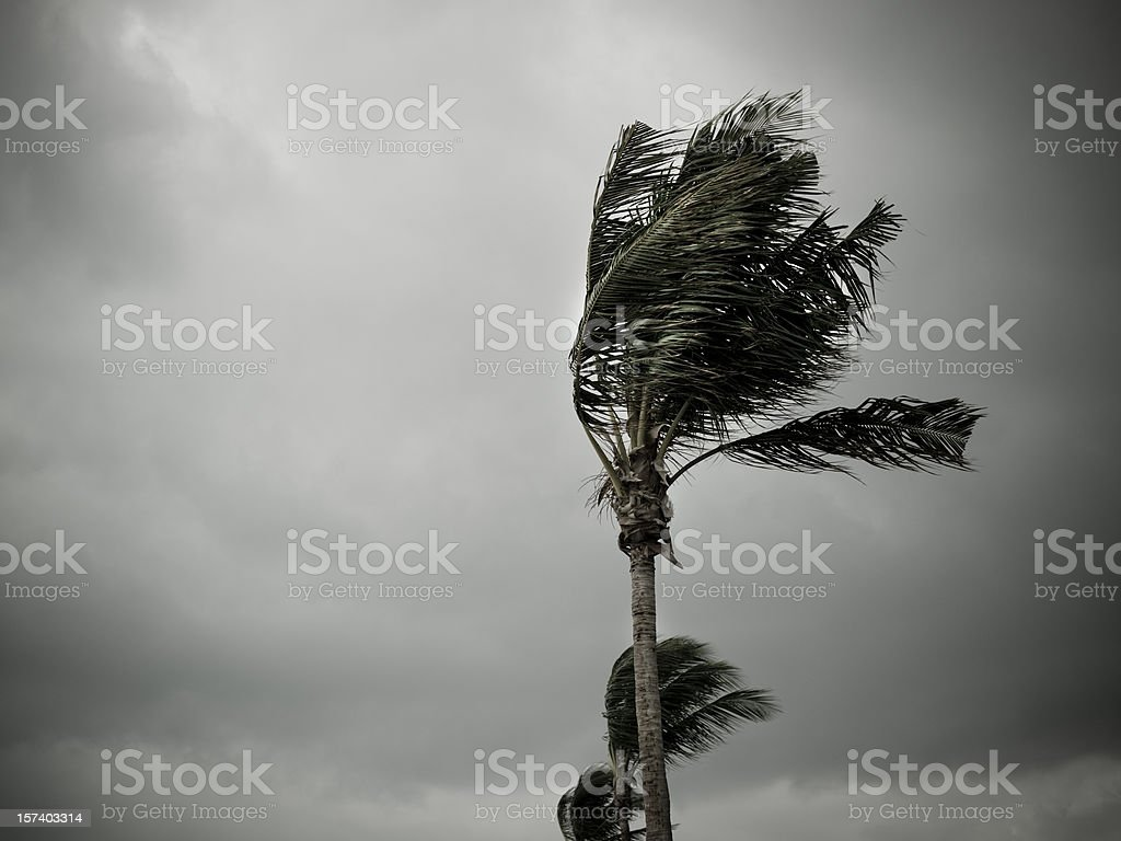 Hurricane winds pound the shore stock photo