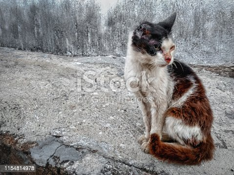 Photograph of a young cat with his ear hurt, standing on the sidewalk, in the rural city of Monte Belo, in Minas Gerais state, Brazil.