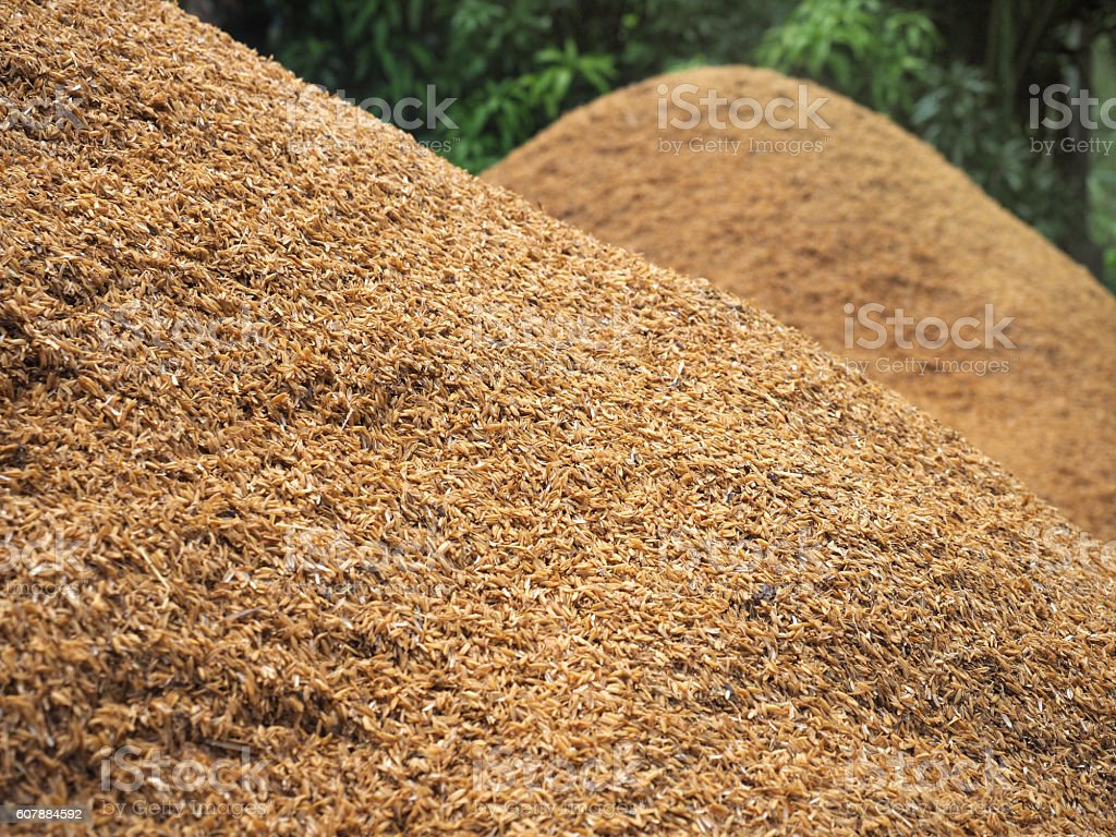 husk prepared for use in agriculture. stock photo
