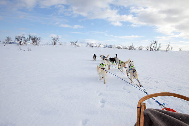 Huskies Pulling Sled Through Fresh Snow stock photo