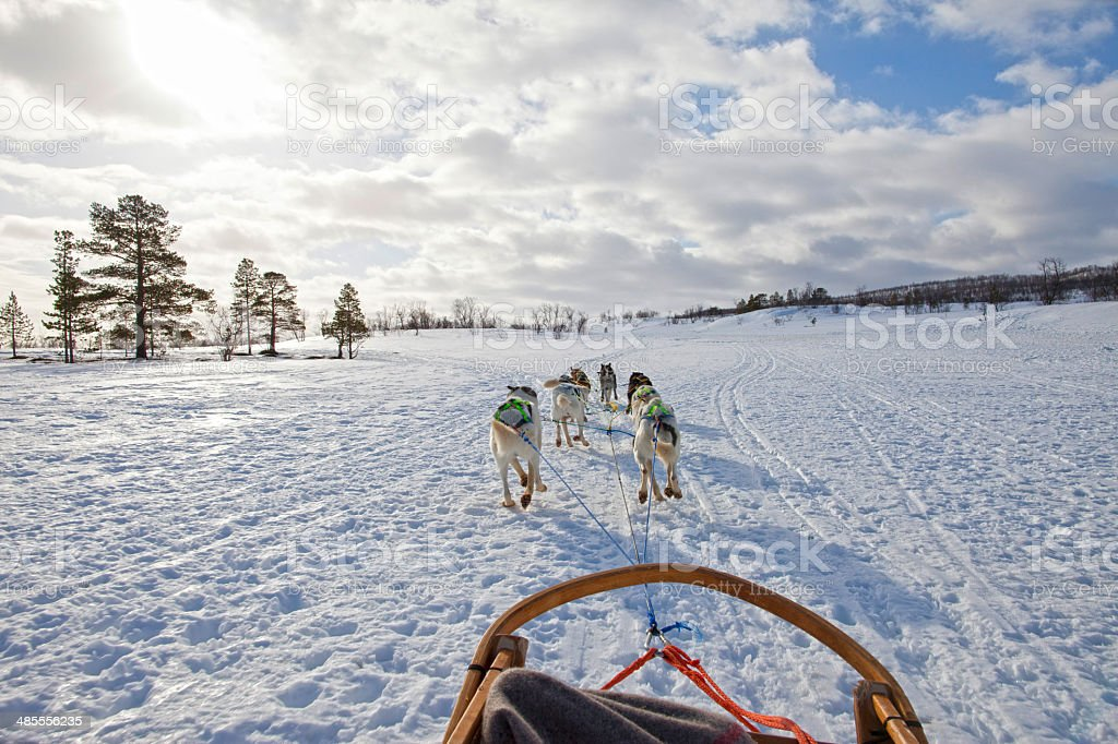 Huskies Pulling Sled Through the Snow stock photo