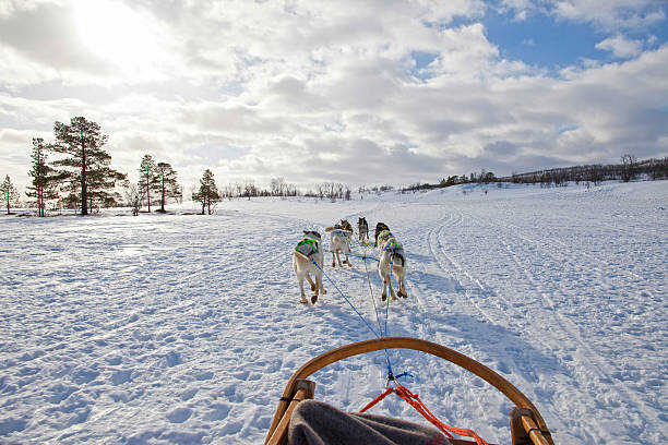 Huskies Pulling Sled Through the Snow Dog Sledding in the Troms countryside, Norway.  working animal stock pictures, royalty-free photos & images