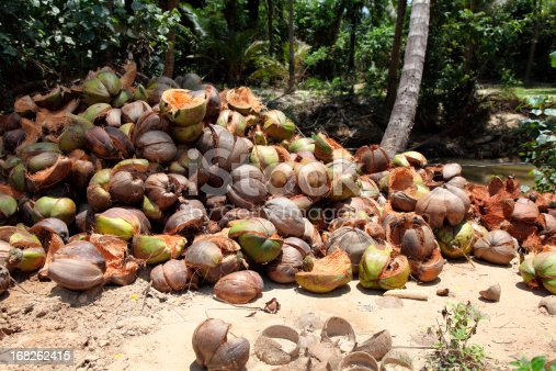 Husks of coconuts-Koh Samui-Thailand