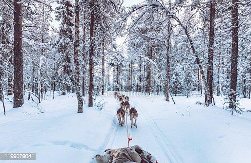 Huskey dogs sledge safari ride at sunset in winter wonderland, Levi, Lapland, Finlad