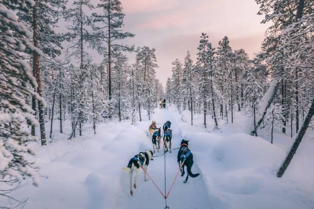 Husky dog sledding in Lapland, Finland stock photo