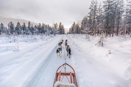 Huskey dogs sledge safari ride at sunset in winter wonderland, Levi, Lapland, Finland