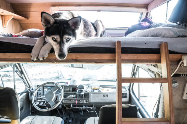 Husky in Einem Wohnmobil – Foto