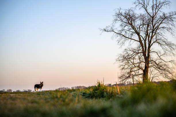 Husky – Foto