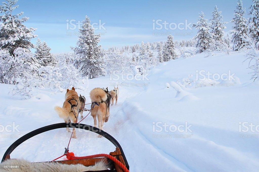 Husky ride stock photo