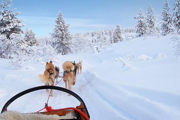 husky ride - norrbotten bildbanksfoton och bilder