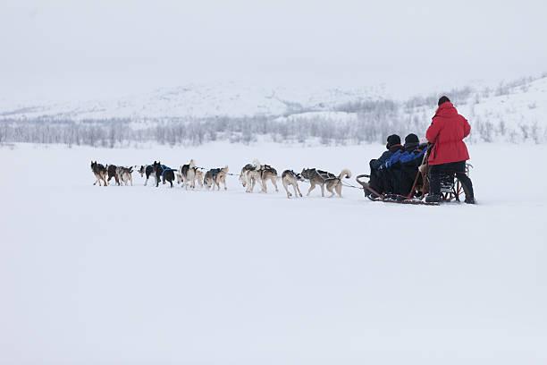 Husky sledding stock photo