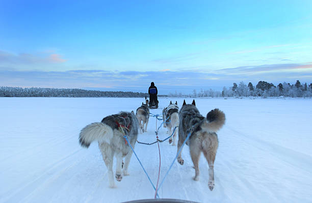 Husky Sleigh Ride on a Frozen Lake A husky sleigh ride in Finland, Nellim, on a frozen lake.  working animal stock pictures, royalty-free photos & images