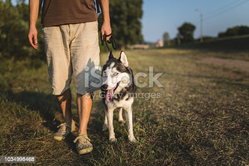 Husky with owner. Copy space.