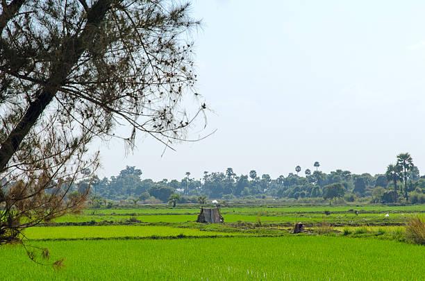 hütte in einem reisfeld.  inwa (ava).  myanmar - mülltonnenhäuschen stock-fotos und bilder