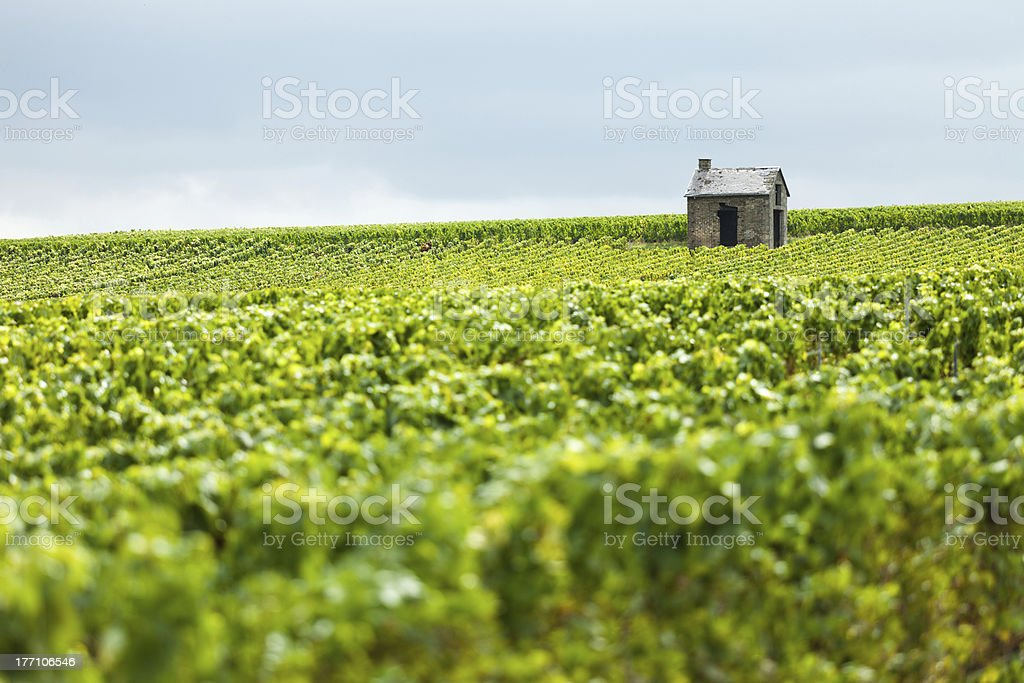 Hut in a Vineyard royalty-free stock photo