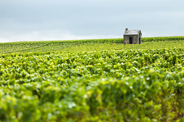 Hut in a Vineyard A hut stands alone in a vineyard in the Champagne Region of France. epernay stock pictures, royalty-free photos & images