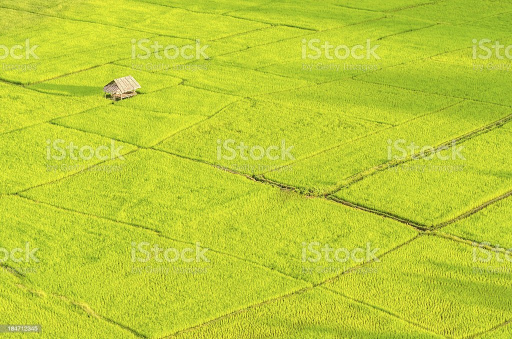 Hut in rice field royalty-free stock photo