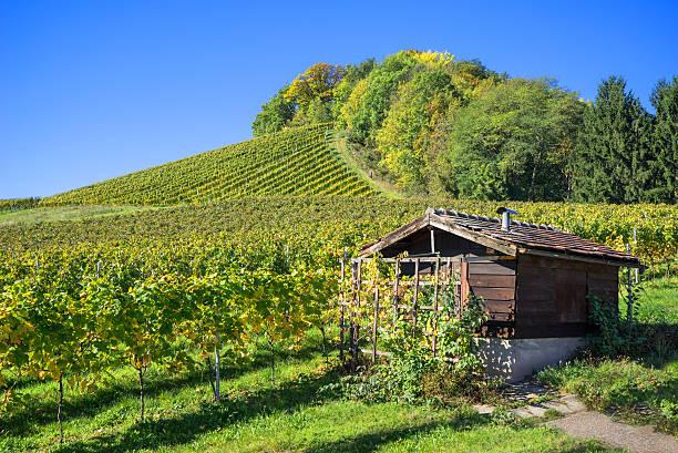hütte in the vineyard - robert weinberg stock-fotos und bilder