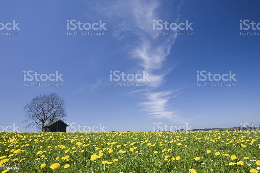 hut on meadow royalty-free stock photo