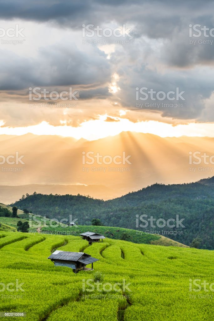 Hut on rice terrace field and light rays tyndall effect royalty-free stock photo