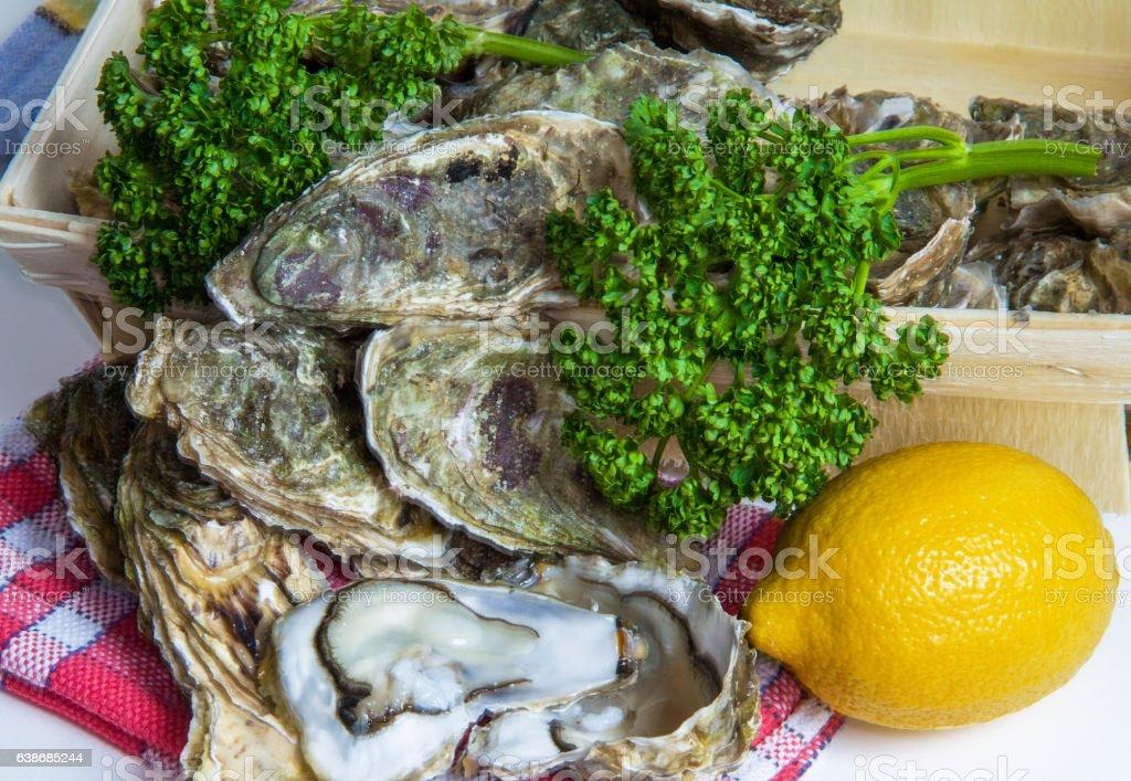 Huîtres creuses bretonnes stock photo