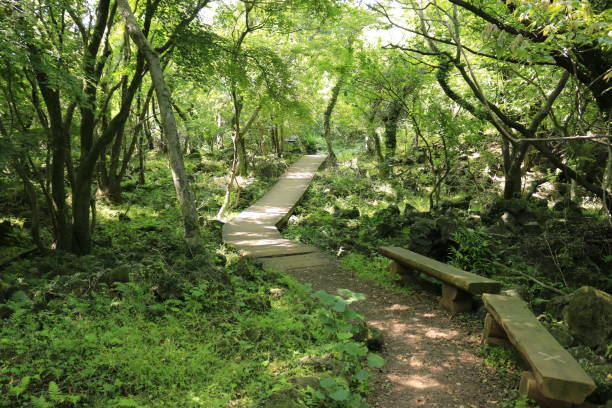 Hwasun Cape Zawal, Forest, Forest, Trail, Walking, Primitive Forest, 제주에 있는 '화순 곶자왈' 이라고 부르는 청정지역의 모습이다. seogwipo stock pictures, royalty-free photos & images