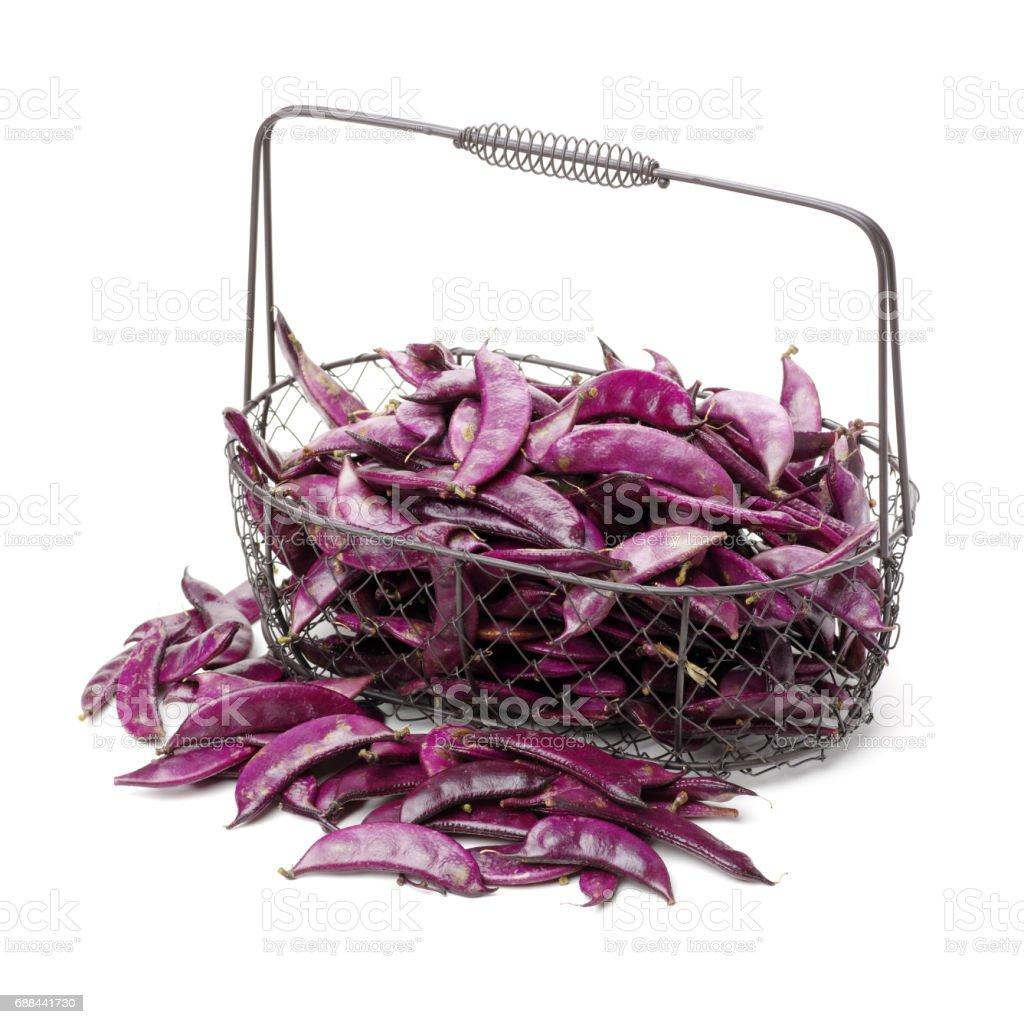 Hyacinth Bean (lila Linsen) auf weißem Hintergrund – Foto