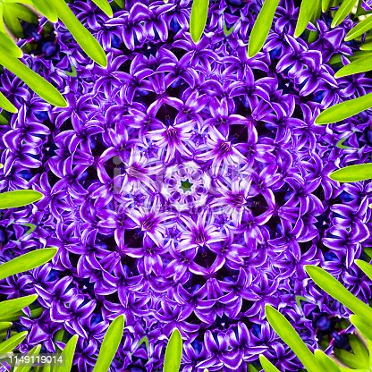 Abstract rendition of a close up of hyacinth flower.