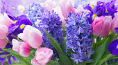 istock hyacinths and tulips 1205610622
