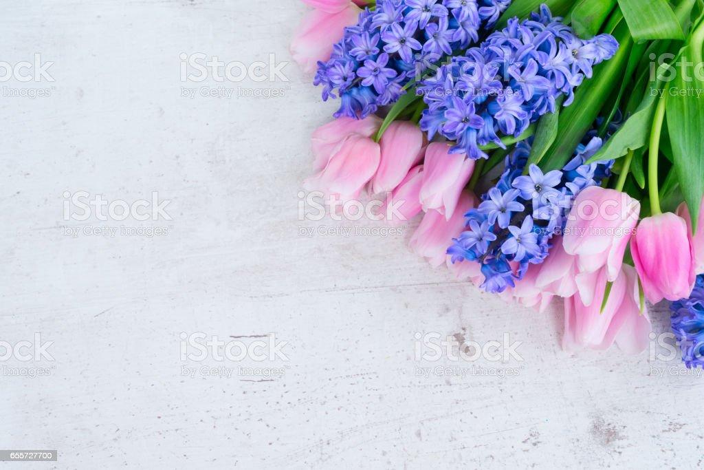 hyacinths, 튤립 - 로열티 프리 3월 스톡 사진
