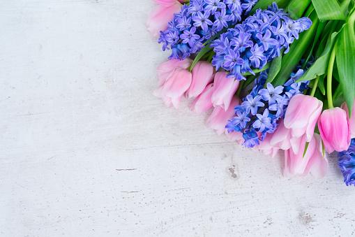 Hyacinths 튤립 3월에 대한 스톡 사진 및 기타 이미지