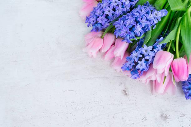 hyacinths, 튤립 - 히아신스 뉴스 사진 이미지