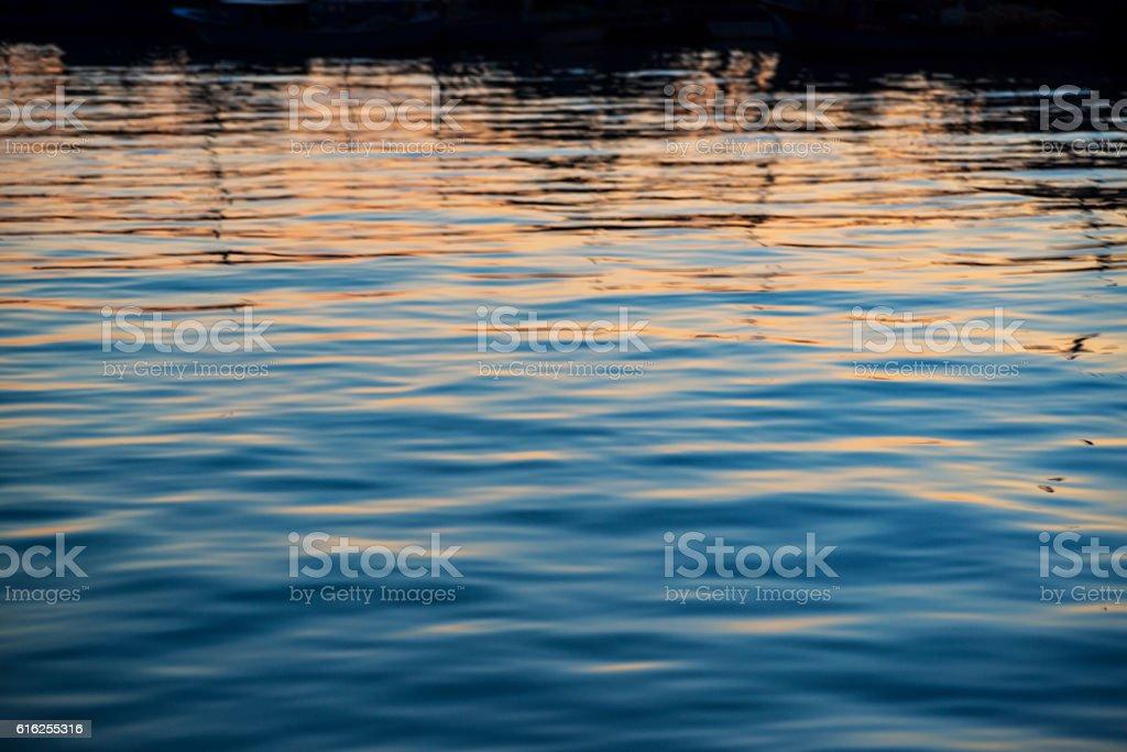 Hyaline (sea) stock photo