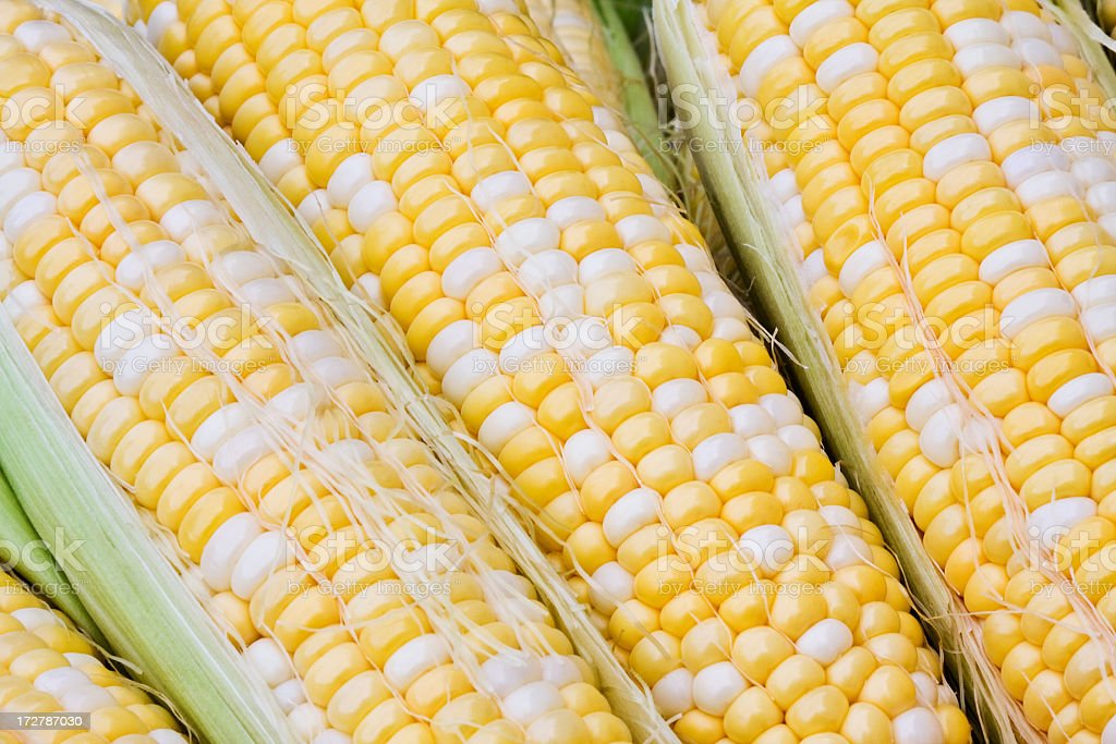 Hybrid Bicolor Sweetcorn royalty-free stock photo