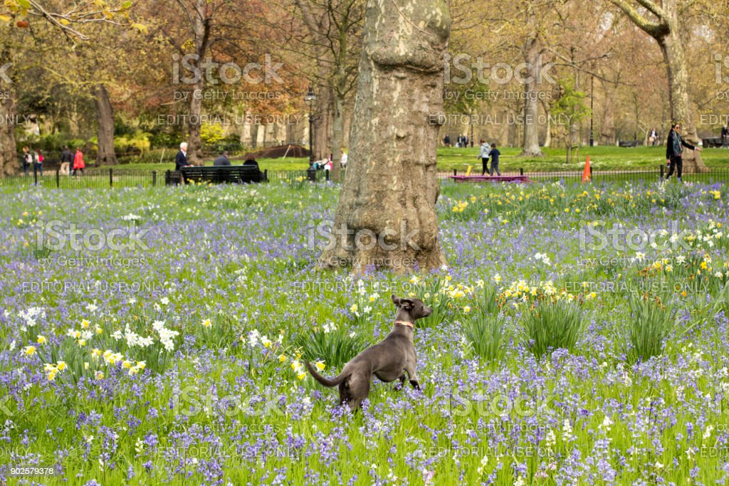 Hyde Park in Westminster, London stock photo