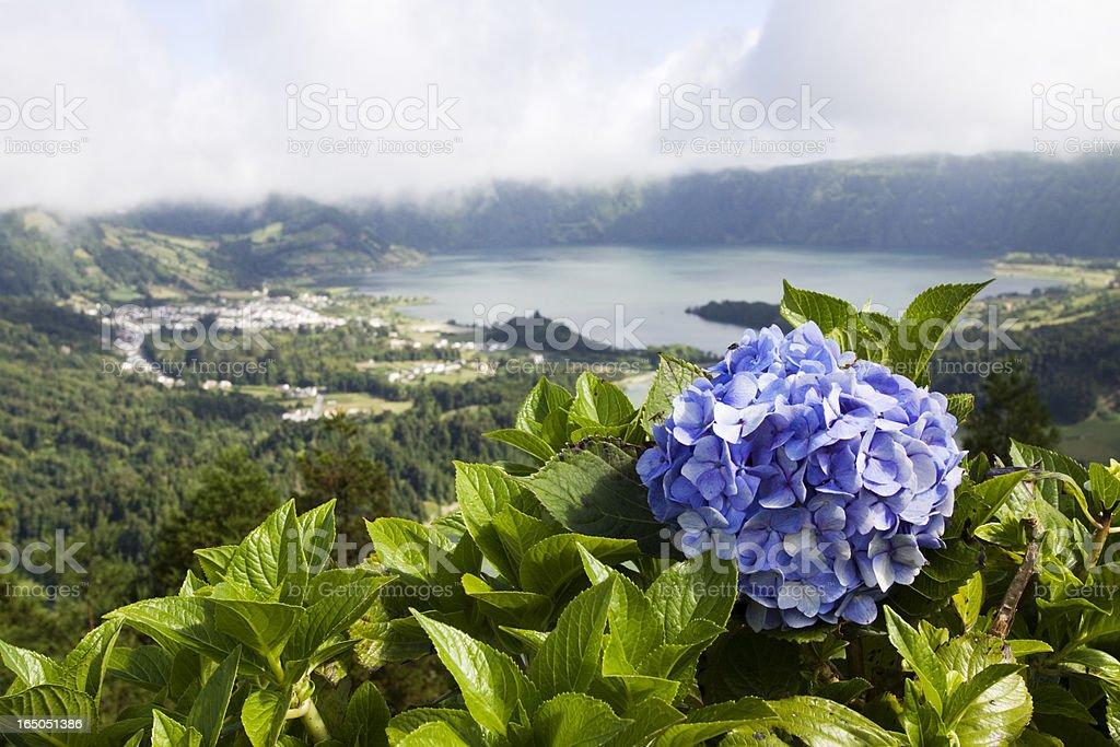 Hydrangea und lake – Foto
